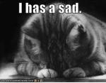 I can has cheezburger - sad